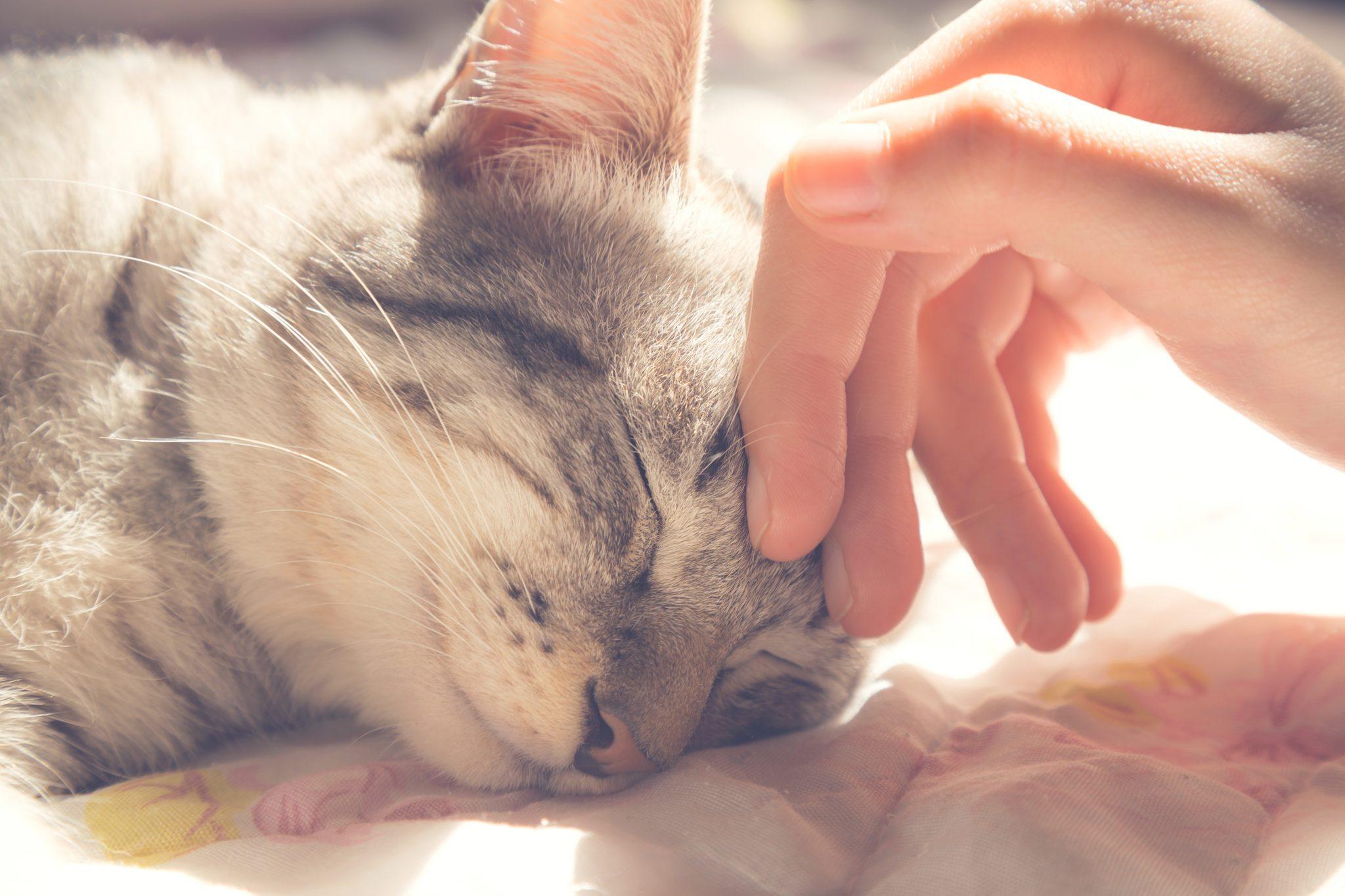 pet communication
