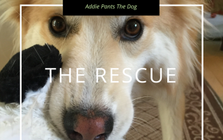 Addie Pants the Dog The Rescue