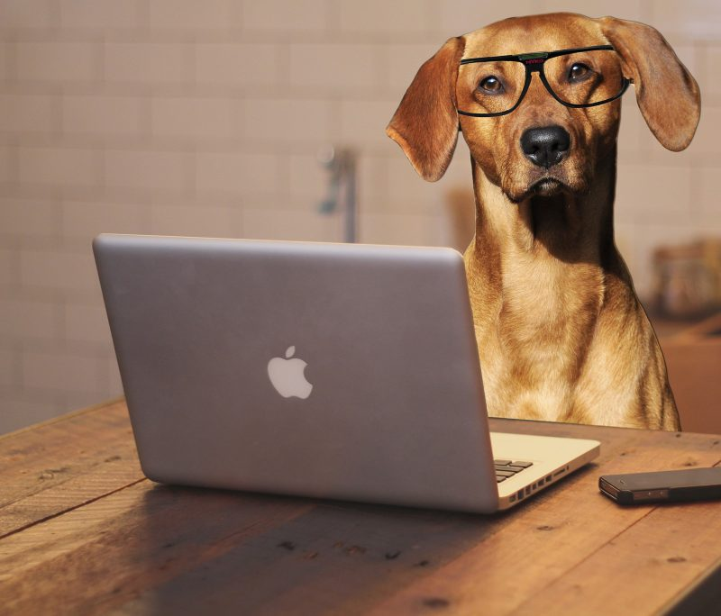Write a Pet Blog